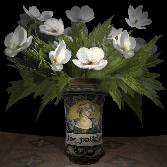 T.M. Glass, 'Anemone Canadensis in an Italian Pharmaceutical Vessel', 2017, Print, Impression d'archive avec pigments / Archival Pigment Print, Galerie de Bellefeuille