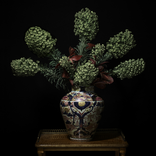 , 'Euphorbia in a Japanese Imari Vessel,' 2018, Galerie de Bellefeuille