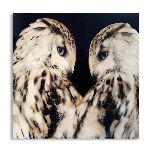 , 'Night Owls,' , Exhibit by Aberson