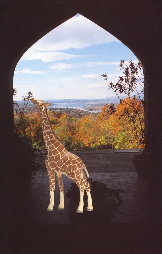 Vikky Alexander, 'Giraffe at Olana,' 2013, Wilding Cran Gallery