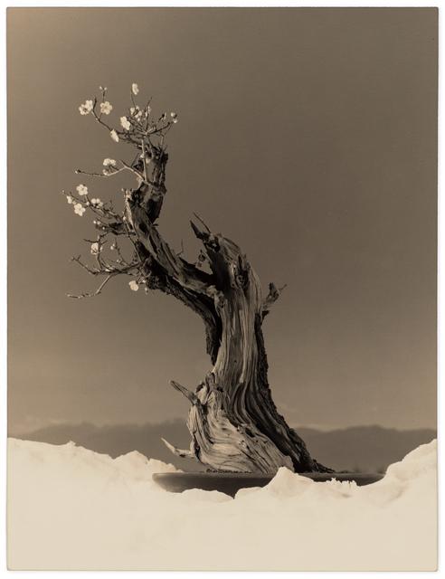 Yamamoto Masao, 'Bonsai #4023', 2019, Robert Koch Gallery