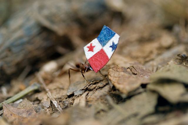 Donna Conlon, 'Coexistence (ant with Panamanian flag)', 2008, Diablo Rosso