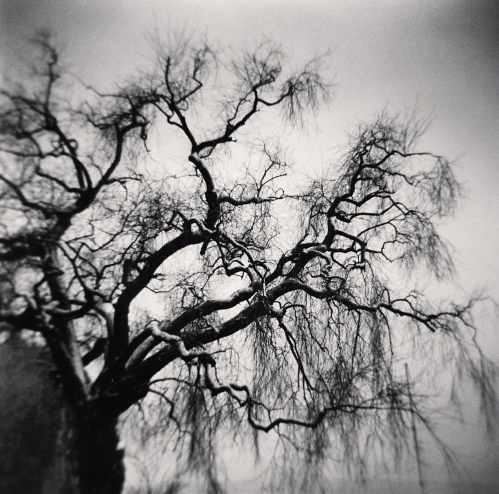 Michael Kenna, 'Trees and Boat Mast, Seefeldquai, Zurich, Switzerland', 2013, Weston Gallery