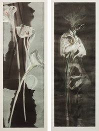 Michael Mazur, 'Tall Calla II; and Tall Calla II,' 1985, Phillips: Evening and Day Editions (October 2016)