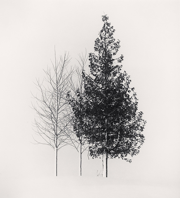 Michael Kenna, 'Tree Portrait, Study 4, Wakoto, Hokkaido', 2002, Dolby Chadwick Gallery
