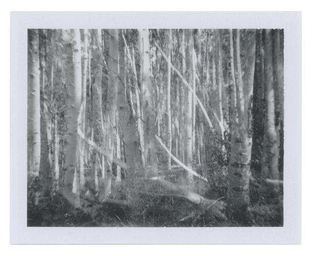 , 'Many Aspens,' 2013, Wirtz Art