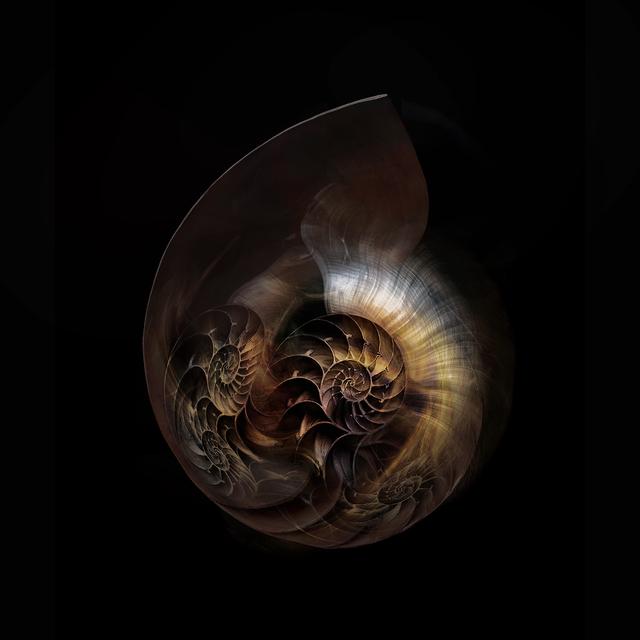 , 'Nautilus Universe,' 2018, ARTE GLOBALE