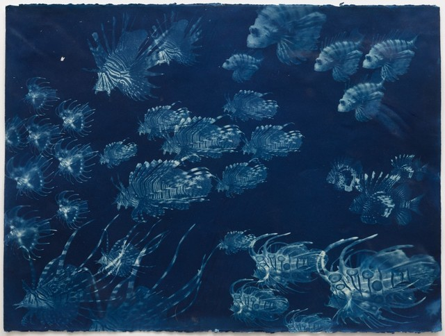 Andrea Chung, 'Untitled', 2016, Drawing, Collage or other Work on Paper, Cyanotype on 140 lbs. watercolor paper, MoAD Benefit Auction