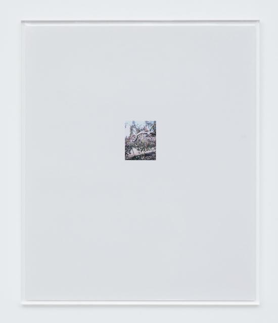 , 'Apple Tree 7,' 2017, Tomio Koyama Gallery