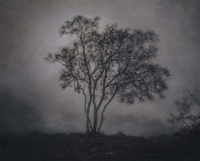 , 'Tree in the Mist, Mt. Etna, Sicily, Italy,' , Etherton Gallery