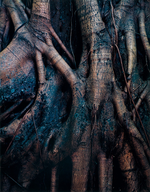 Eliot Porter, 'Strangler Fig Roots, Everglades National Park, Florida', 1954, Scheinbaum & Russek Ltd.