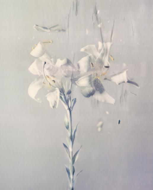 , 'Lilium candidum P03,' 2018, Talley Dunn Gallery