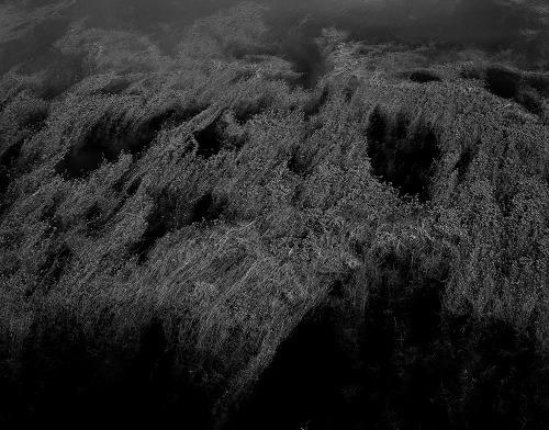 Amelia Stein, 'Pond Weed', 2017, Oliver Sears Gallery