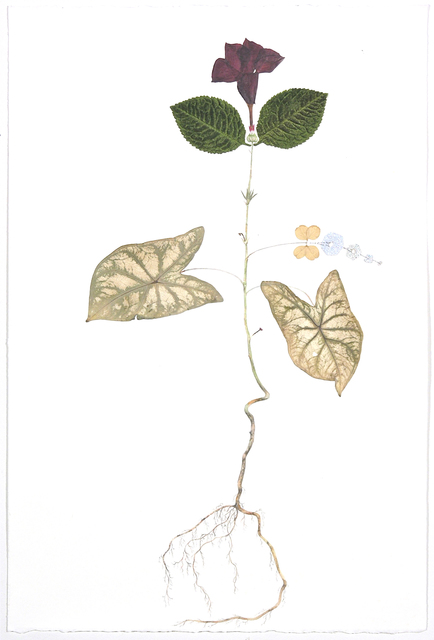 Marilla Palmer, 'Mandeville Oak ', 2016, Kathryn Markel Fine Arts