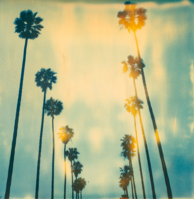 Stefanie Schneider, 'Palm Trees on Wilcox', 1999, Photography, Digital C-Print based on a Polaroid, mounted on Dibond with matte UV-Protection, Instantdreams