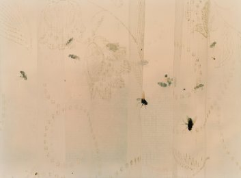 Untitled (Flies in Curtain)