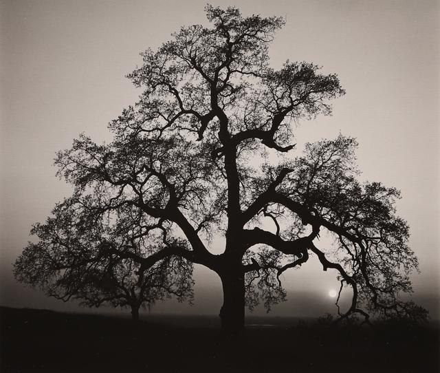 , 'Oak Tree, Sunset City,' 1962, Seagrave Gallery
