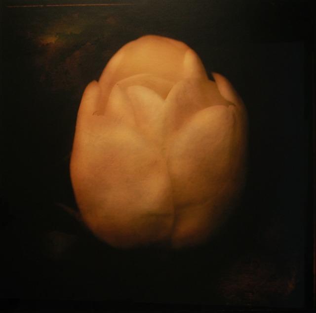 Jack Spencer, 'Magnolia 7/20', Gail Severn Gallery