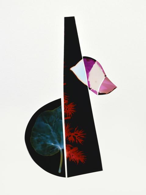 , 'Garden Design (Unappealing Contrast),' 2012, GALLERY 1/1