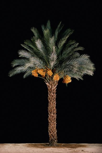 , 'Tamar #3 (Date Palm),' 2011, Meislin Projects