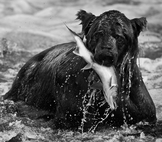 David Yarrow, 'Catch', 2012, Isabella Garrucho Fine Art