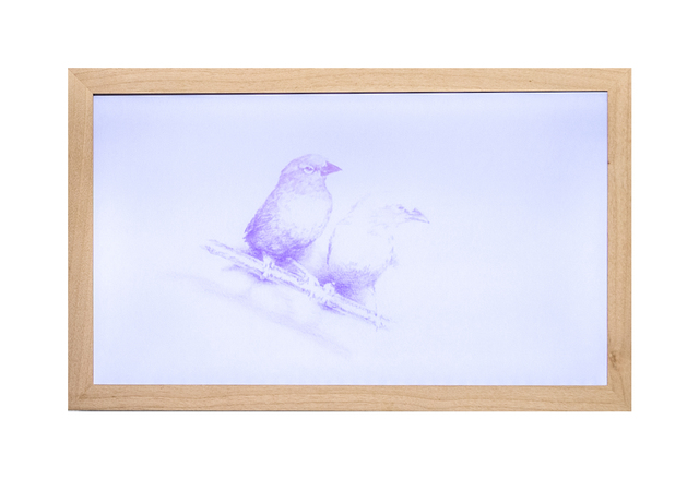 , '72 colours (Birds),' 2007, HUMO Gallery