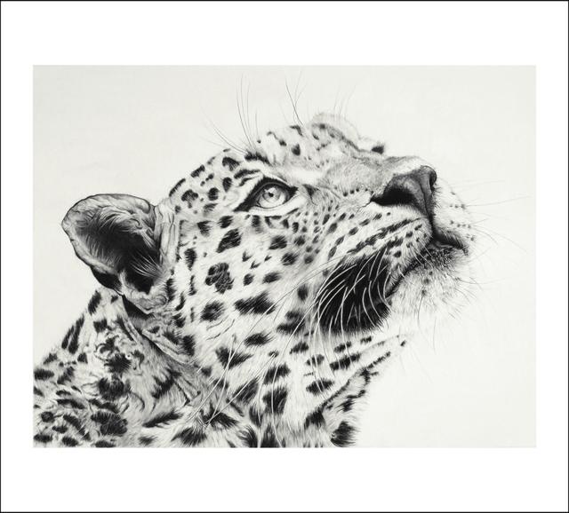 , 'JAWAI Leopard,' 2017, Candida Stevens
