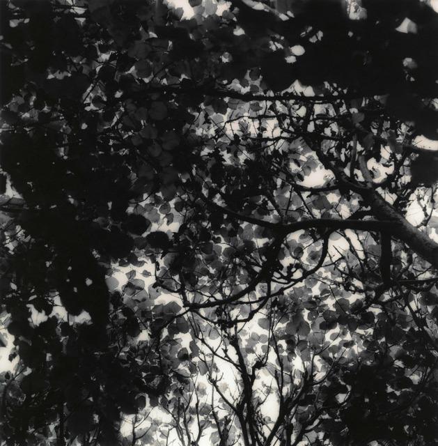 Ken Rosenthal, 'Autumn', 2010, Photography, Split-Toned Gelatin Silver Print, photo-eye Gallery