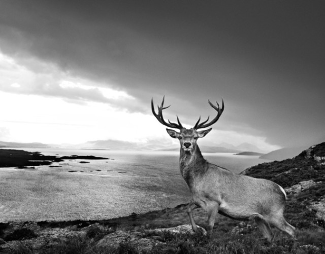 David Yarrow, 'Over The Sea To Skye', 2017, Photography, Archival Pigment Print, Maddox Gallery
