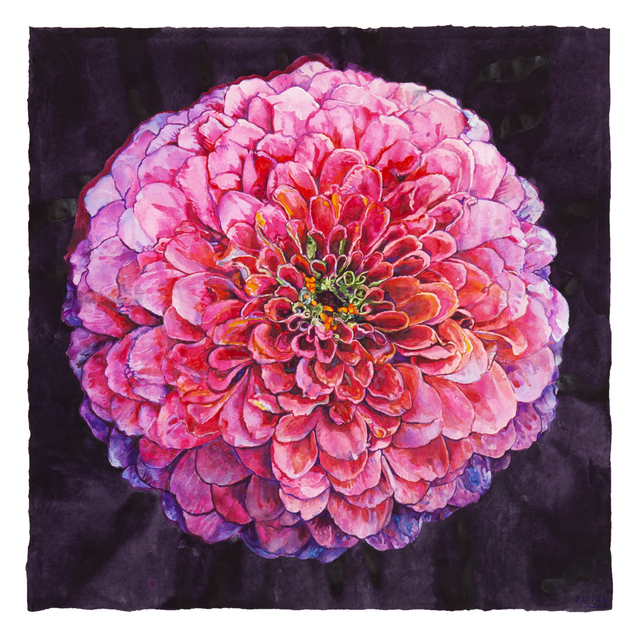 Joseph Raffael, 'Zinnia', 2018, Painting, Watercolor on paper, Nancy Hoffman Gallery