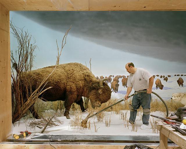Richard Barnes, 'Man with Buffalo from Animal Logic', ca. 2005, Bau-Xi Gallery