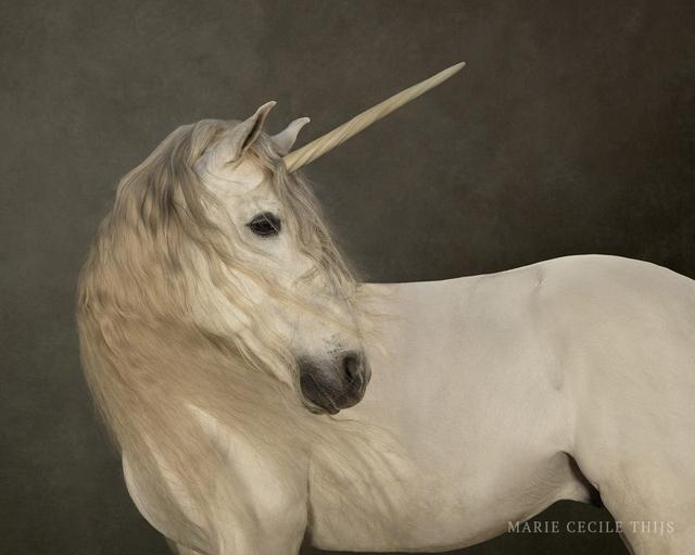 , 'White Unicorn,' 2009, SmithDavidson Gallery