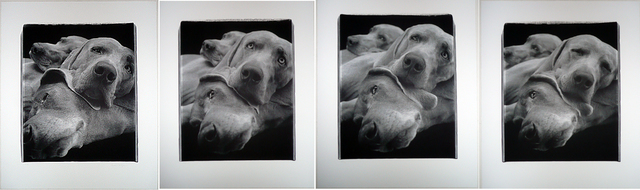 William Wegman, 'Chain (suite of four panels)', 1998, Kenneth A. Friedman & Co.