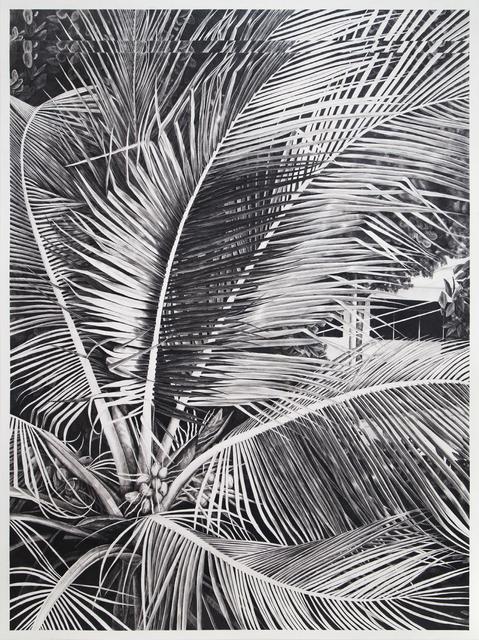 , 'Sans titre (palmier),' 2015, SKETCH