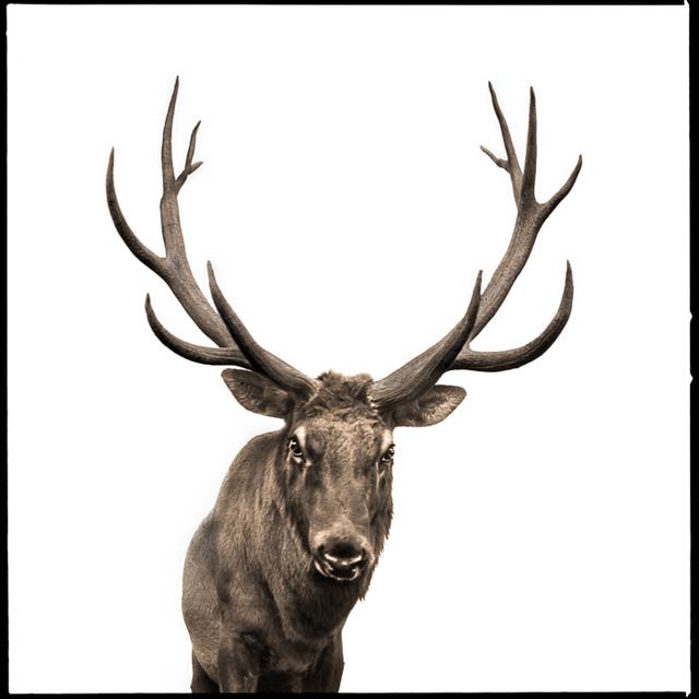 , 'Elk-II,' , Visions West Contemporary