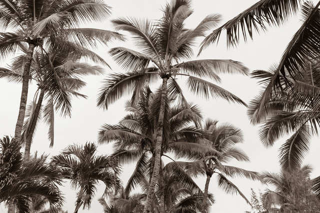 Jessica Nugent, 'Tropical Breeze No1', ArtStar