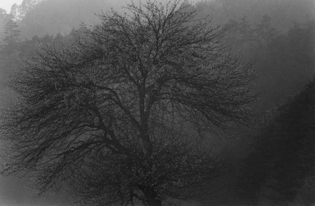Lee Gap-chul, 'Bonghwa', 2004, Photography, Three Shadows +3 Gallery