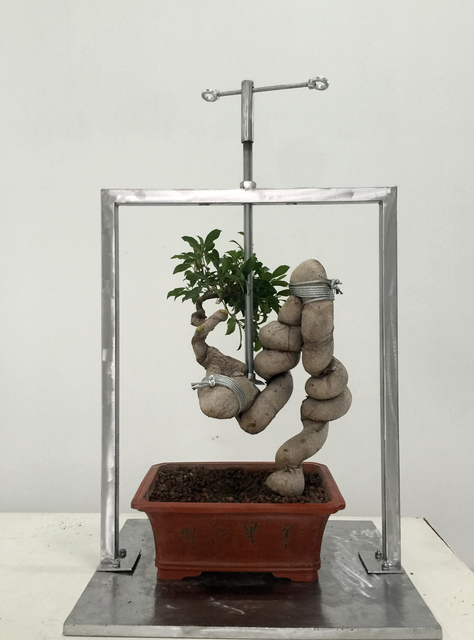 Shen Shaomin, 'Potted Landscape_2', 2015, Total Museum of Contemporary Art