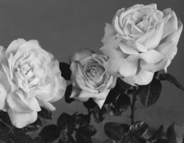 , 'Roses,' 2010, Nina Johnson