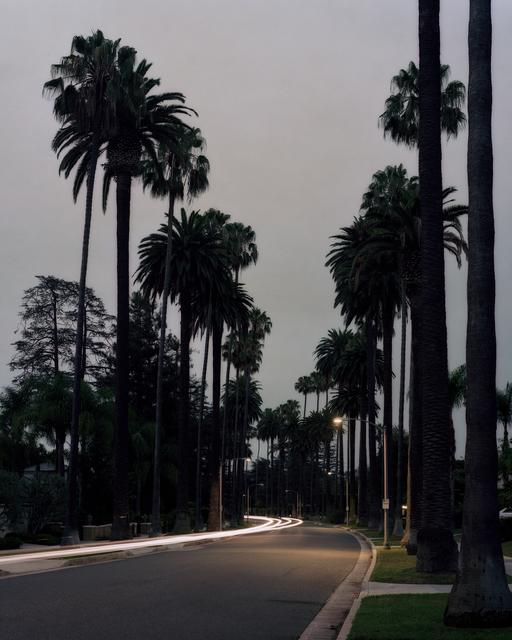 , 'Los Angeles Palms #19,' , Samuel Maenhoudt Gallery