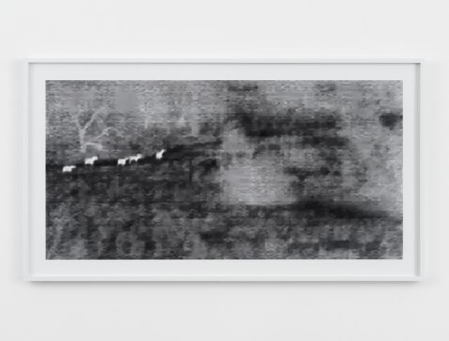, 'Wild Horses (Surveillance Series),' 2009, Magenta Plains
