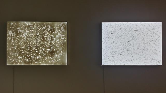 , 'Tracing of Rain,' 2009, Galerie Ora-Ora