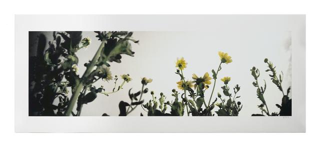 Lo Lai Lai Natalie, 'The Circadian Clock: Crown Daisy (I) no.2', 2018, Blindspot Gallery