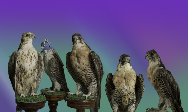 ", '""Birds of Prey"" from the series, Glory of the Artifice,' 2015, East Wing"