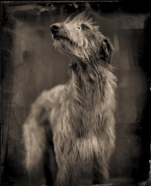 , 'Bog Dog,' 2014, Etherton Gallery
