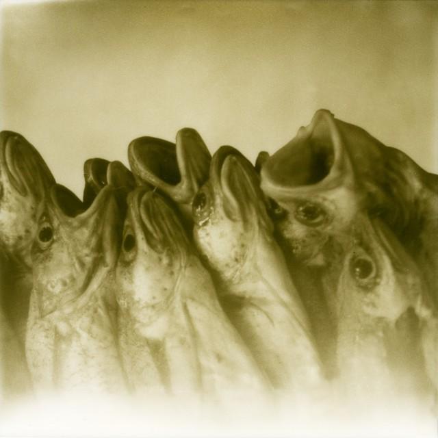 , 'Silentium,' 2013, Galerija Fotografija