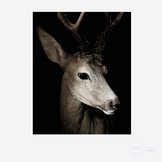 , 'Deer,' 2014, ILEX Gallery