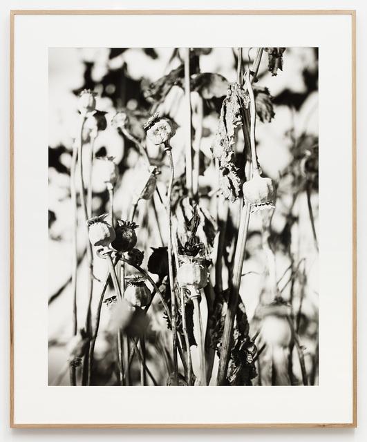 , 'Praying Mantis (2),' 2017, Galleri Nicolai Wallner