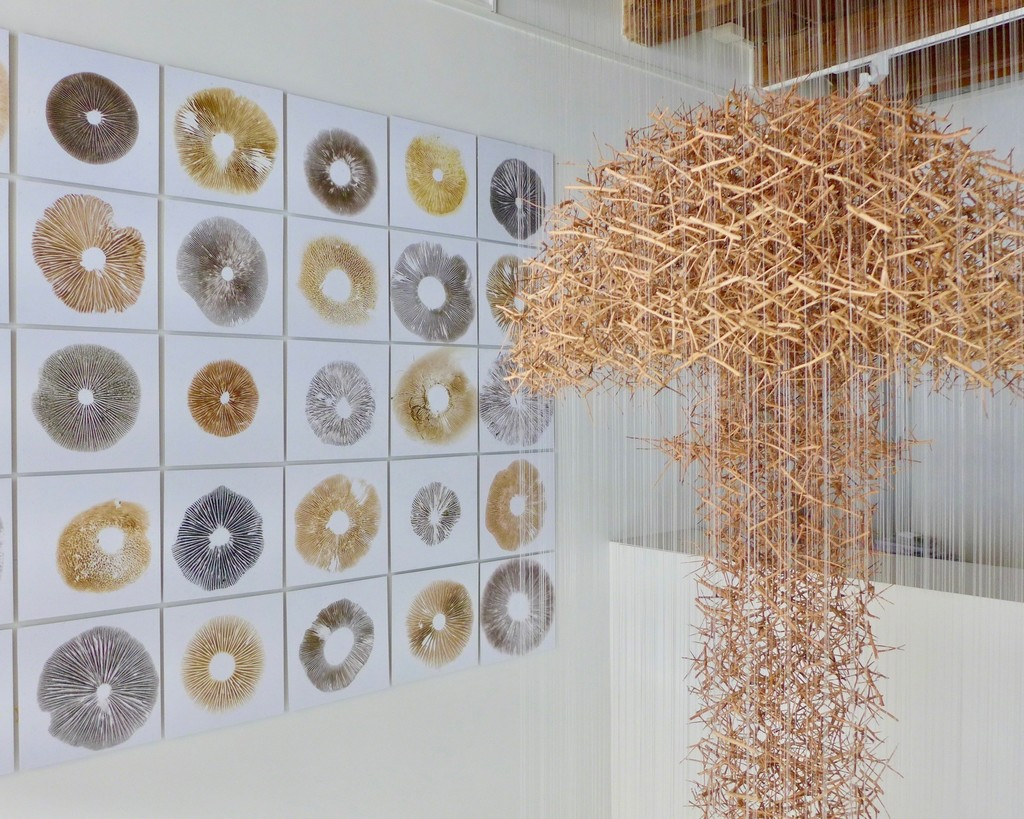 "Installation view of ""Cloud of Thorns"" ""Spore Grid"""