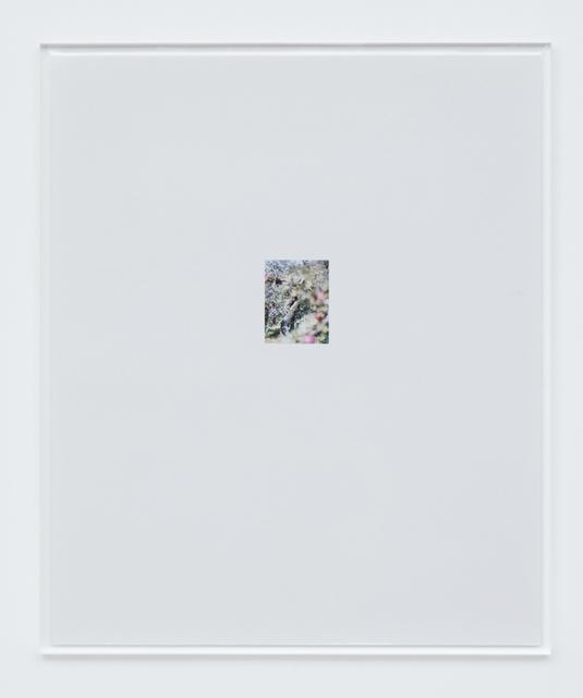 , 'Apple Tree 4,' 2017, Tomio Koyama Gallery